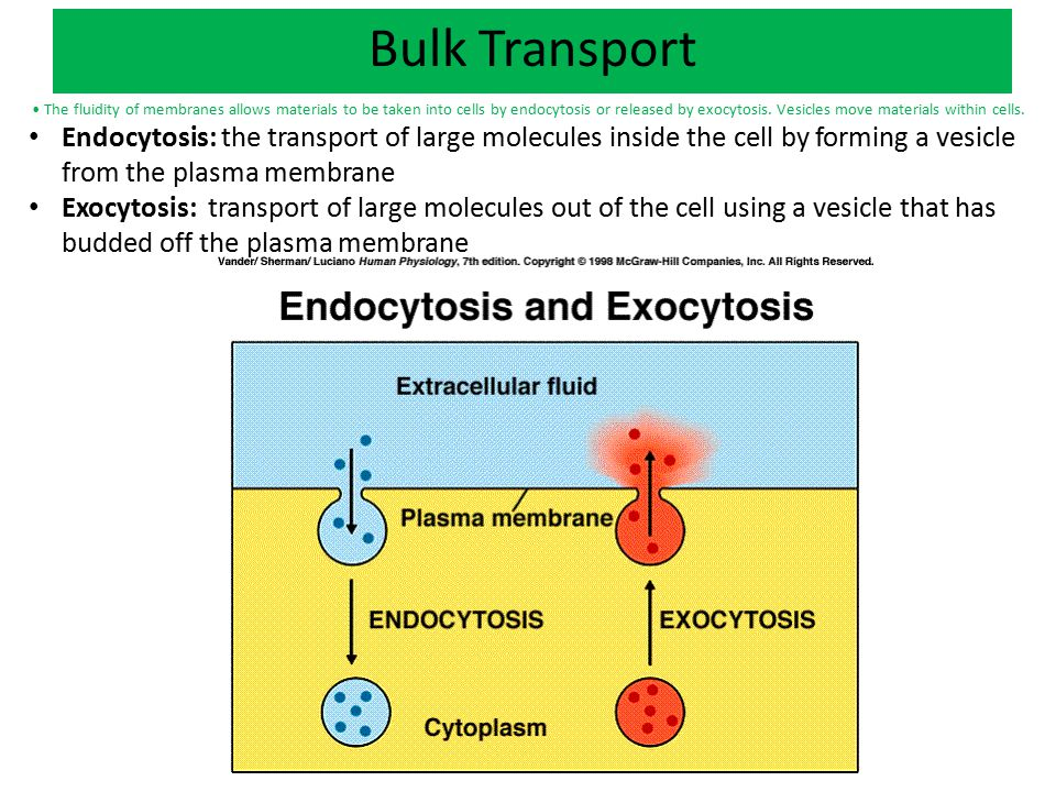 Different Types of Endocytosis The fluidity of membranes allows materials to be taken into cells by endocytosis or released by exocytosis.
