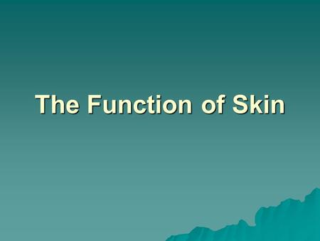 The Function of Skin. The skin has four basic functions I. Protection A. Physical barrier to disease, dirt, and dehydration A. Physical barrier to disease,