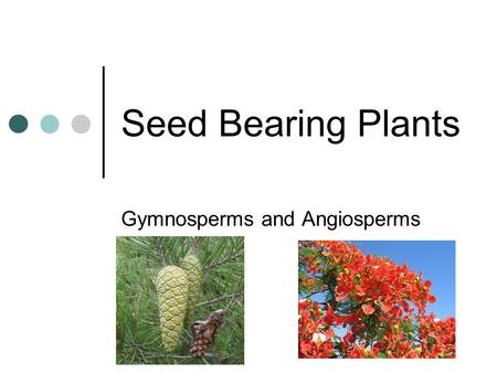 "Seed Bearing Plants Gymnosperms and Angiosperms. Gymnosperms ""Naked Seeds"" Cone bearing plants Pine trees and ginkgo."