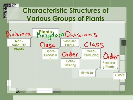 Characteristic Structures of Various Groups of Plants
