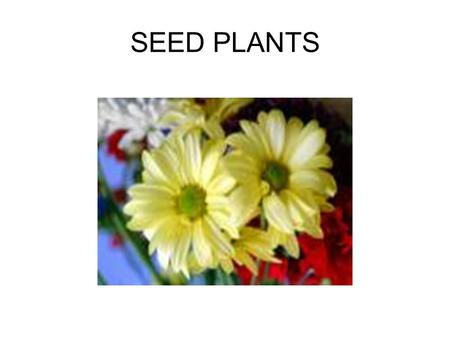 SEED PLANTS Characteristics of Seed Plants Most seed plants have leaves, stems, roots, and vascular tissue Reproduce by seeds, which contain an embryo.