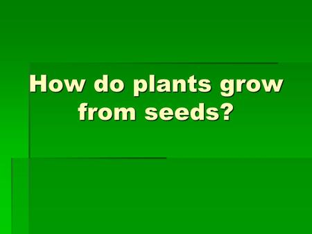 How do plants grow from seeds?. Seeds  Seeds come in many sizes, shapes, and colors.  They can all grow a new plant.