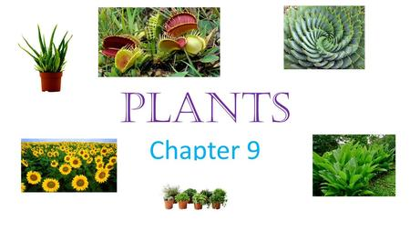 PLANTS Chapter 9. PLANT CELLS Unlike animal cells, plant cells have cell walls, which provide structure and protection Most plant cells contain the green.