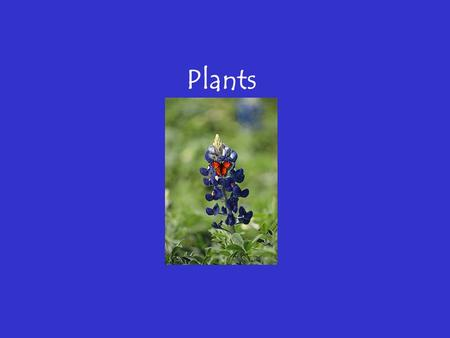 Plants Overview of PLANTS Chapter 22 Overview of Plants The plant kingdom's impact on our lives cannot be overstated. A broad understanding of plants.