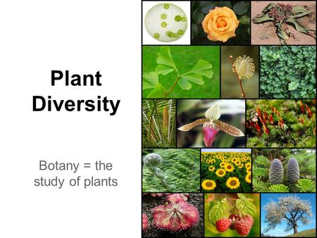 Plant Diversity Botany = the study of plants. General Plant Charactertistics ●Living things that have roots, stems, and leaves ~ some have flowers ●Eukaryotes.
