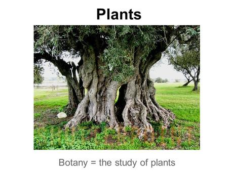 Plants Botany = the study of plants. Nonvascular plants have no vessels, no roots, no stems or leaves. Examples: Mosses & Liverworts.