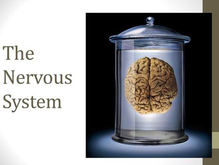 The Nervous System. Opening Question What are the two main parts of the Nervous System?