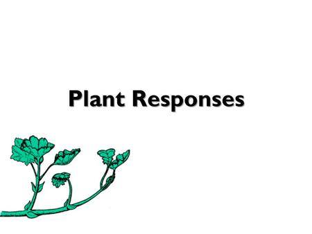 Plant Responses. Do plants have feelings? Do plants have senses? Can plants detect stimuli (and if so, which)? Can plants respond to stimuli? Plant Responses.