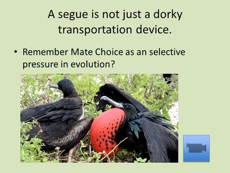 A segue is not just a dorky transportation device. Remember Mate Choice as an selective pressure in evolution?