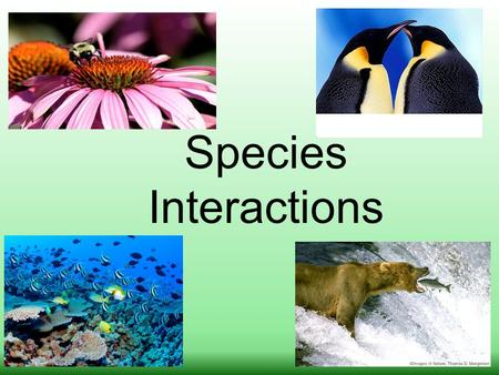 Species Interactions. FIVE MAJOR TYPES OF SPECIES INTERACTIONS COMPETITION (-/-) PREDATION (+/-) PARASITISM (+/-) MUTUALISM (+/+) COMMENSALISM (+/0) Effects.