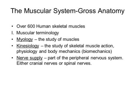The Muscular System-Gross Anatomy Over 600 Human skeletal muscles I. Muscular terminology Myology – the study of muscles Kinesiology – the study of skeletal.