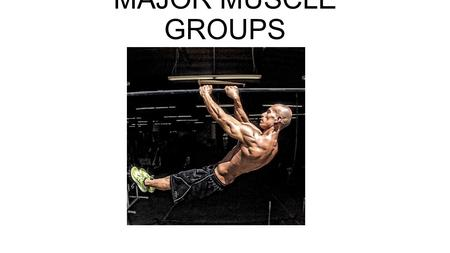 MAJOR MUSCLE GROUPS. 13 MAJOR MUSCLE GROUPS There are 650 skeletal muscles in the human body!!!! You are only going to learn 13 of the major muscle groups.