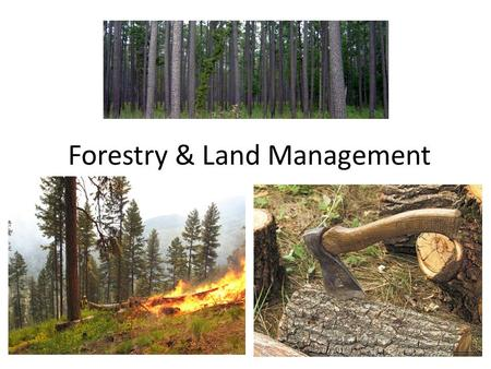 Forestry & Land Management. This lecture will help you understand: Ecological and economic contributions of forests Forest management and harvest methods.