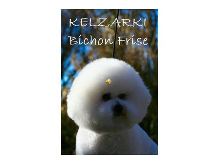 KELZARKI BICHON FRISE Quarterly update as at August 2012 Les Bradney, Tom Tancred and Shawn Cullen. Contact: 0246512310 or or
