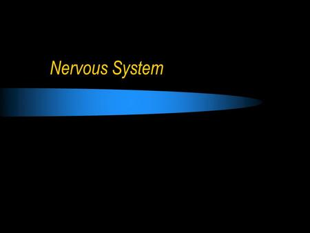 Nervous System. Responds to stimuli to maintain homeostasis. Stimulus (Stimuli) = a signal to which an organism reacts Response = some action or movement.