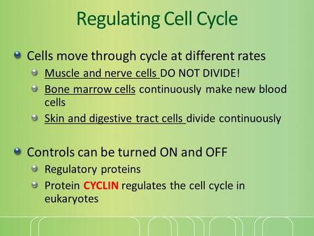 Regulating Cell Cycle Cells move through cycle at different rates Muscle and nerve cells DO NOT DIVIDE! Bone marrow cells continuously make new blood cells.
