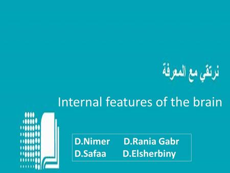 Internal features of the brain D.Nimer D.Rania Gabr D.Safaa D.Elsherbiny.