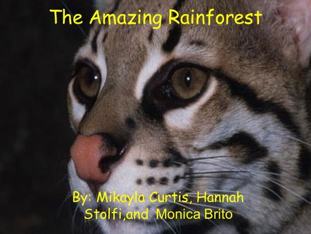 The Amazing Rainforest By: Mikayla Curtis, Hannah Stolfi,and Monica Brito.