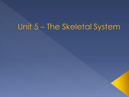  Skeletal system includes bones of the skeleton, and the cartilage, ligaments, and other connective tissues that stabilize and/or connect the bones.