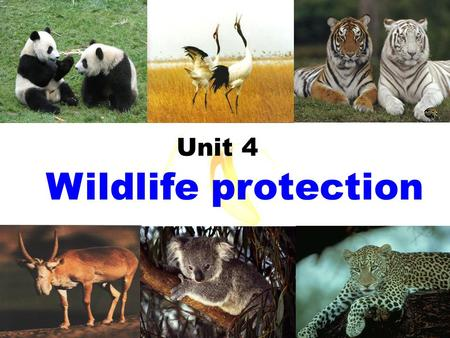 Wildlife protection Unit 4 We call them _______.wildlife Animals or plants live or grow in natural conditions.