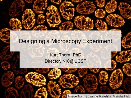 Designing a Microscopy Experiment Kurt Thorn, PhD Director, Image from Susanne Rafelski, Marshall lab.