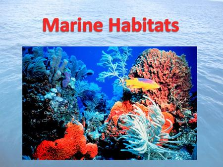 A habitat is the natural home or environment of an organism Since 71% of planet Earth is covered in water, many different types of marine habitats exist.