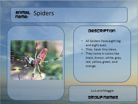 Spiders Put a picture of your animal here Luis and Maggie All Spiders have eight leg and eight eyes. They have tiny claws. They come in colors like black,