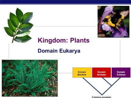 ap biology plants essays Ap biology evolution essay questions and answers phillip e pack taught ap biology for eleven years he is currently professor of evolution, and.