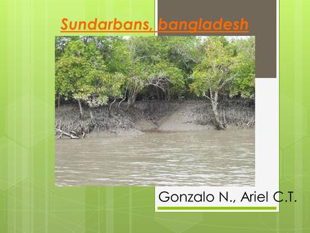 Sundarbans, bangladesh Gonzalo N., Ariel C.T.. Presentation  The Sundarbans are a World Heritage Site which consists of three wildlife sanctuaries (Sundarbans.