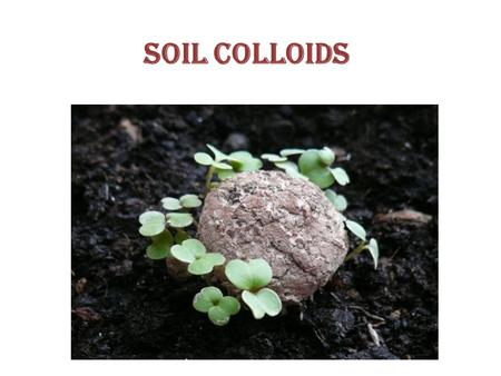 Soil colloids. CHEMICAL PROPERTIES OF SOIL: Soil Colloids cat ion Exchange organic matter / Organic carbon Carbon –Nitroge ratio Soil fertility Soil reaction.