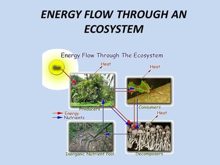 ENERGY FLOW THROUGH AN ECOSYSTEM. Learning Targets I can explain how energy flows through an ecosystem using the following terms: food chain, food web,