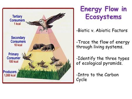 Lesson Overview Lesson Overview Energy Flow in Ecosystems -Biotic v. Abiotic Factors -Trace the flow of energy through living systems. -Identify the three.