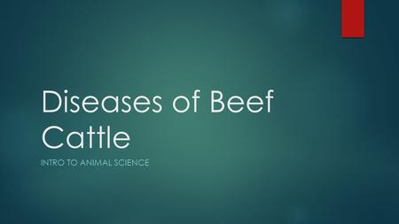 Diseases of Beef Cattle INTRO TO ANIMAL SCIENCE. Symptoms of a healthy bovine.  Temperature – 100.4 to 102.8 degrees  Pulse rate- 60-70 beats per minute.