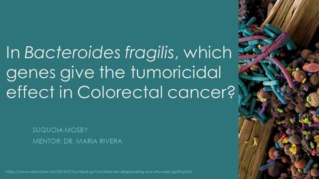 In Bacteroides fragilis, which genes give the tumoricidal effect in Colorectal cancer? SUQUOIA MOSBY MENTOR: DR. MARIA RIVERA https://www.nextnature.net/2014/01/our-tribal-gut-bacteria-are-disappearing-and-why-were-getting-fat/
