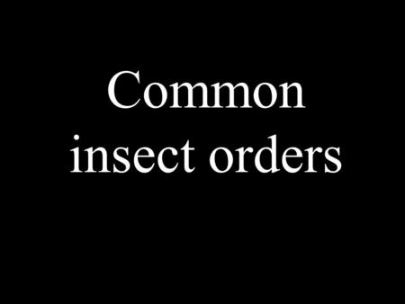 Common insect orders. Insects are the most species- rich group of organisms on earth as indicated in this species-scape. The size of the organism reflects.