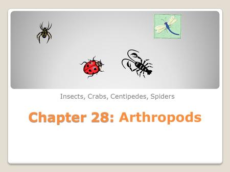 Chapter 28: Chapter 28: Arthropods Insects, Crabs, Centipedes, Spiders.