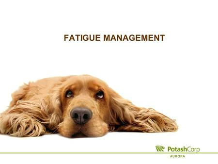 FATIGUE MANAGEMENT. What is Fatigue? A state of physical or mental weariness that results in reduced alertness The result of a lack of adequate sleep.