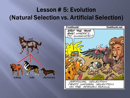 Lesson # 5: Evolution (Natural Selection vs. Artificial Selection)