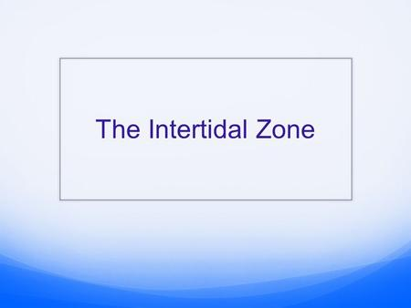 The Intertidal Zone.  Area of the shore between high tide and low tide  Also known as the littoral zone.