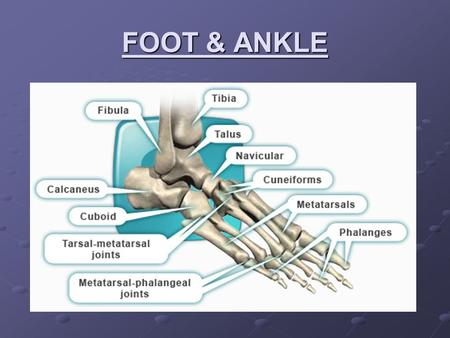 FOOT & ANKLE. 4 Motions of the Foot PlantarflexionDorsiflexionInversionEversion.