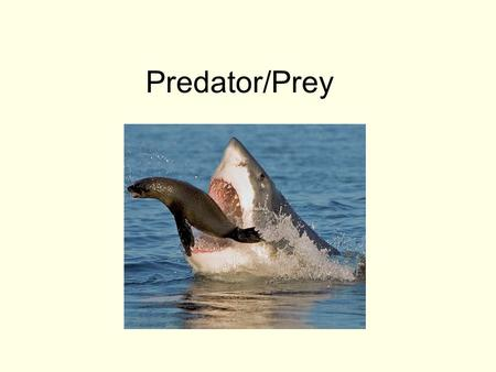 Predator/Prey. Two big themes: 1.Predators can limit prey populations. This keeps populations below K.
