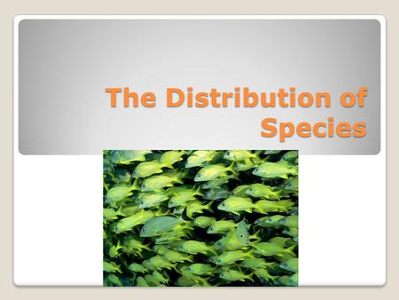 The Distribution of Species. How are organisms distributed in these biomes? Why are organisms found in some biomes but not others? The answer to these.