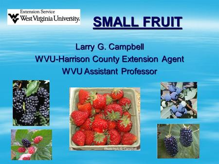SMALL FRUIT Larry G. Campbell WVU-Harrison County Extension Agent WVU Assistant Professor Photo by L.G. Campbell.