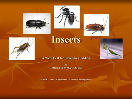 Insects A WebQuest for Preschool Children by Rebecca Miller, MA CCC-SLP Cricket Beetle Carpenter Ant Cockroach Praying Mantis.