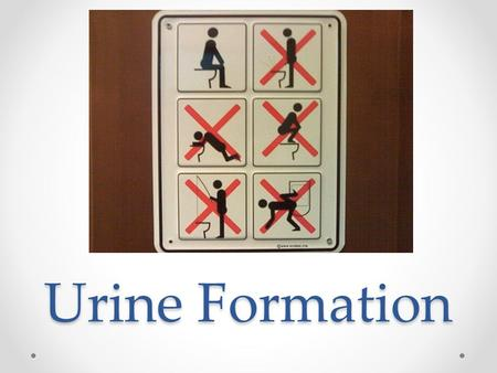 Urine Formation. Filtration: removing maximum waste from the blood At the Glomerulus there is very high pressure that filters a lot of stuff out of the.
