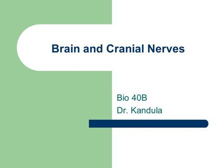Brain and Cranial Nerves Bio 40B Dr. Kandula. Brain Part of CNS Found in dorsal body cavity Continuous with spinal cord at foramen magnum The development.