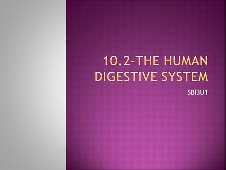 SBI3U1. The Digestive System is made up of 1)The Digestive Tract 2)Accessory Organs.