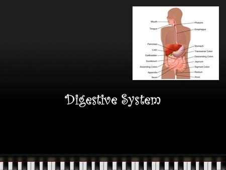 Digestive System. Digestion: The chemical breakdown of large food molecules into smaller molecules that can be used by cells. The basic fuel molecules.