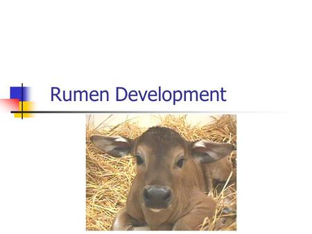 Rumen Development. Gut Function After Birth Digestion and absorption similar to monogastric Function of the reticular groove Enzyme activity of saliva,