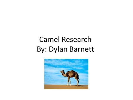 Camel Research By: Dylan Barnett. Fact 1 A mother camel gives birth in 12 - 14 months to one calf. When the calf is born it weighs 80 pounds and is most.